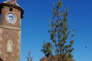 Where's it to? Can you spot where this tree and clock tower are?